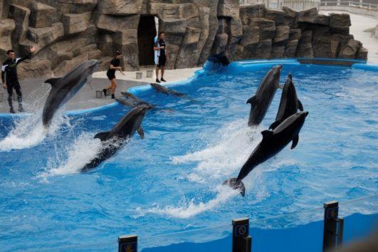 Дельфинарий Батуми